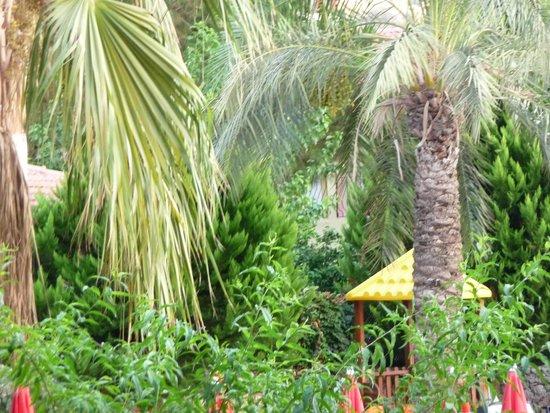 Mavi Belce: Garden area