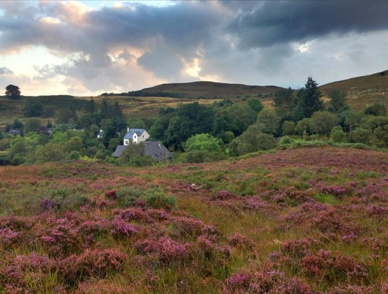 Roineabhal Country House: A walk in the heather near Roineabhal.