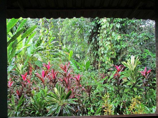 Tortuga Lodge & Gardens : Out the back deck