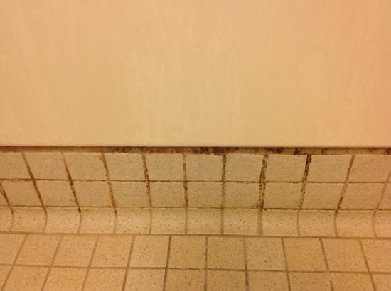 Red Roof Inn Kalamazoo West - Western Michigan U: more mold in shower