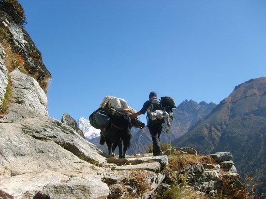 Nepamount Trekking
