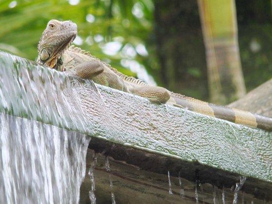 The Royal Corin Thermal Water Spa & Resort: leguana