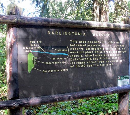 Darlingtonia State Natural Site: Darlingtonia State Botanical Wayside, Florence, Oregon