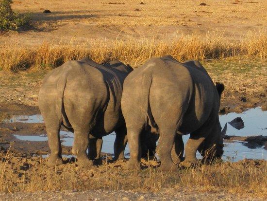 Simbambili Game Lodge: Rhinos at sunset