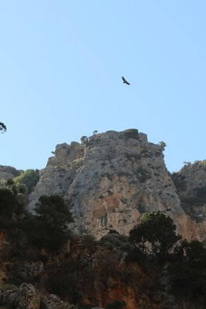 Spilia Village Hotel: vultures in a local gorge
