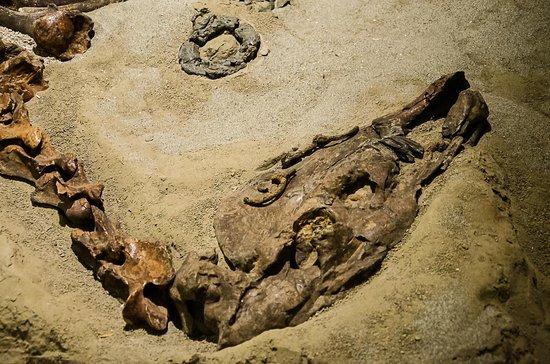 Museo Archeologico Nazionale di Adria : -