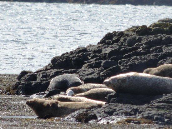 Claigan Coral Beach: isolotto delle foche