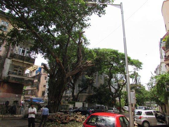 Ascot Hotel : garden street
