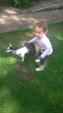 Wetheriggs Animal Rescue Centre: My niece petting the baby goat