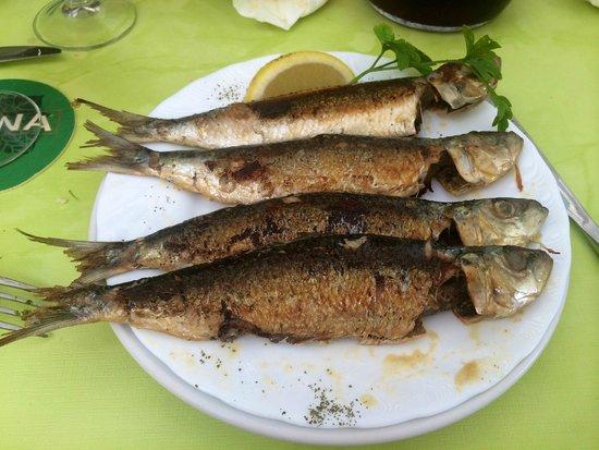 Arcon Tapas: sardines