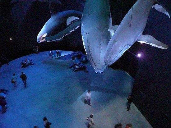 Ozeaneum : Bei den Walen