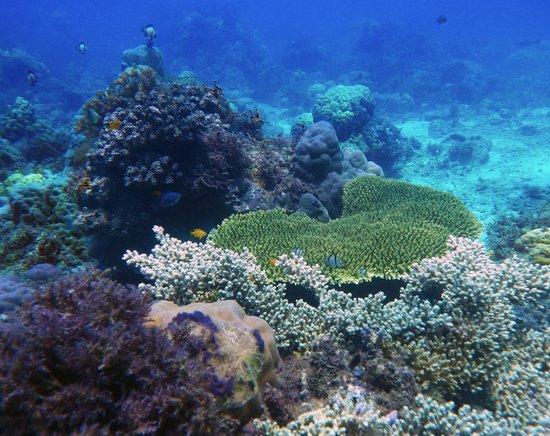 Hapitanan Beach: Underwater view