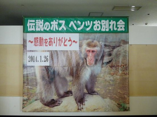 Takasakiyama Natural Zoo: 前ボス猿ベンツお別れ写真