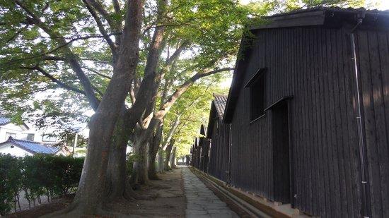Sankyo Soko Storehouse : ケヤキ並木と倉庫