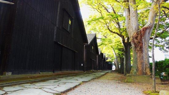 Sankyo Soko Storehouse : ケヤキ並木と倉庫2