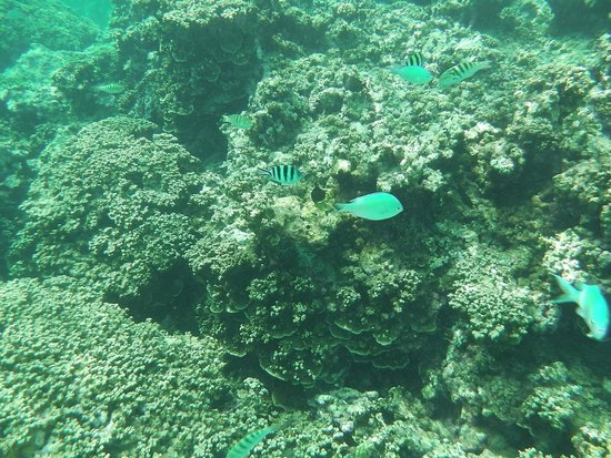 Cocos Island Resort: 魚も豊富