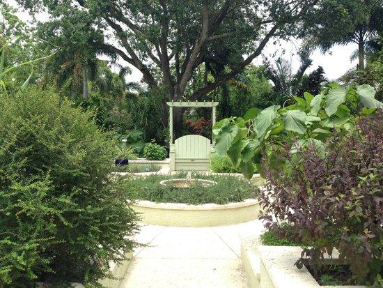Interesting Trees Picture Of Mounts Botanical Garden West Palm Beach Tripadvisor