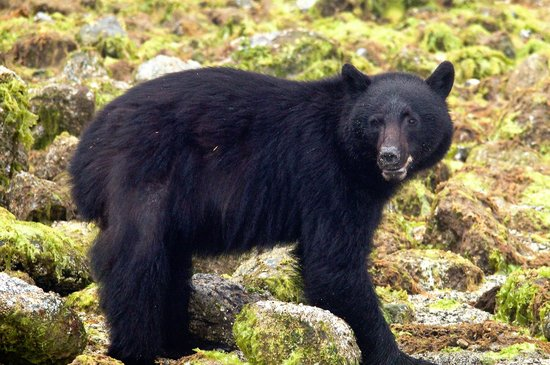 Blue Bear Bed and Breakfast: from our bear-watching trip