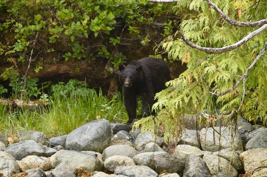Blue Bear Bed and Breakfast: local wildlife