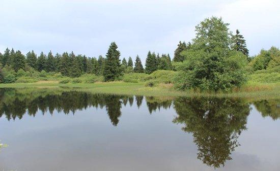 Schotten, Germany: Forellenteich im Hohen Vogelsberg