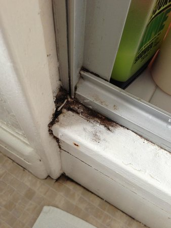The Red House: Dirty shower bacteria