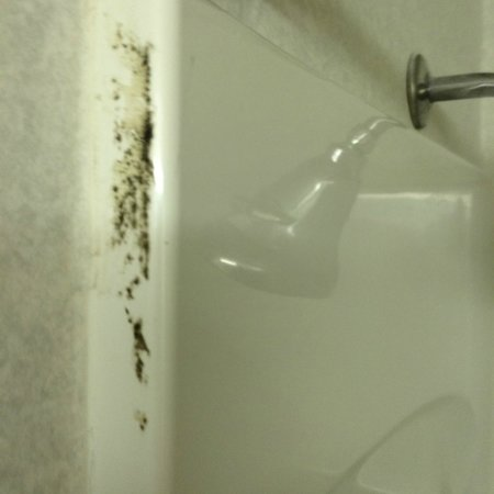 Ramada Toledo Hotel and Conference Center: Bathroom mold