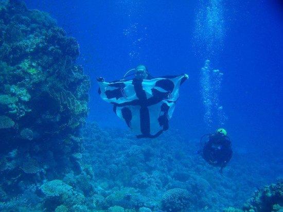 Diving Center Dive Club Italiano : Viva la Sardegna