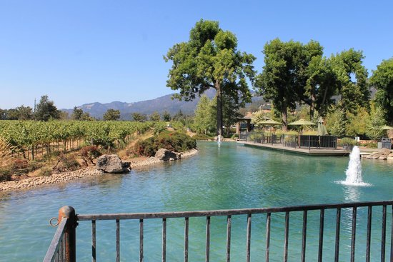 Kunde Family Winery : Great view in Kunde estate