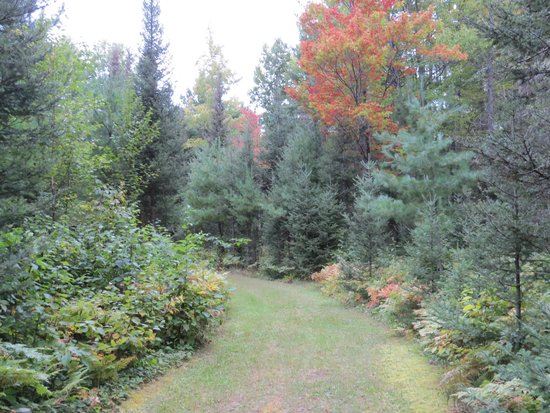 Trout Creek, MI: Trail in the woods