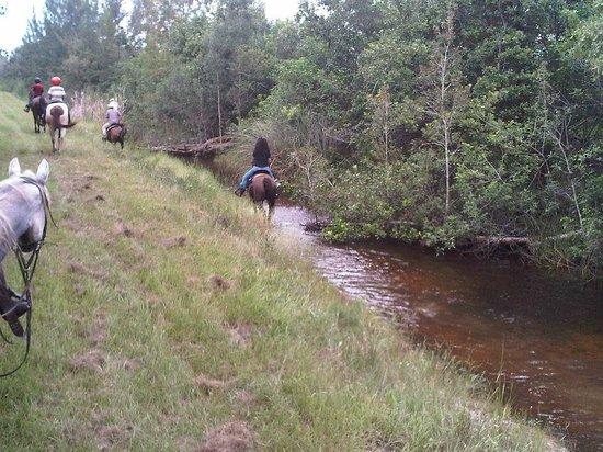 American Horse Trails Southwest Ranches Fl Anmeldelser