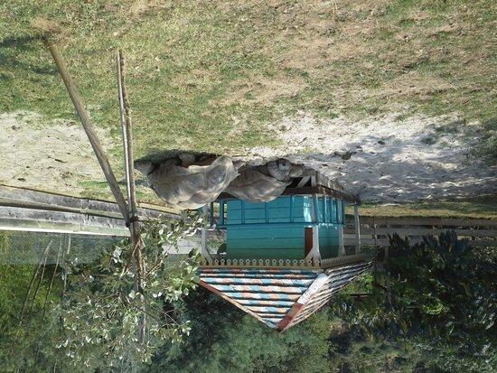 Sorede, Γαλλία: tortue geante