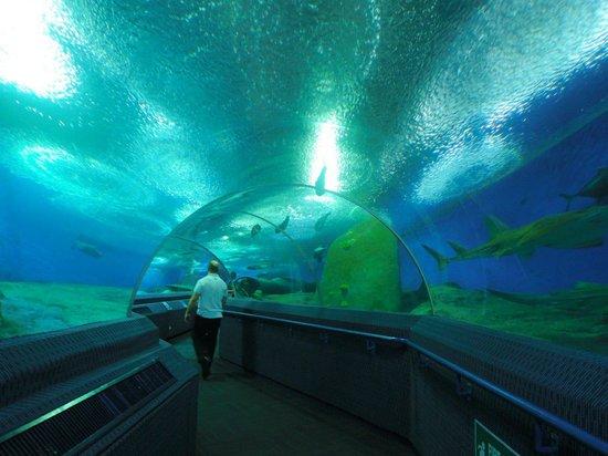 Underwater World Pattaya: Sharks