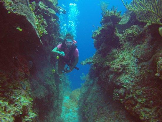 Dreamtime Dive Center : swim through the reef