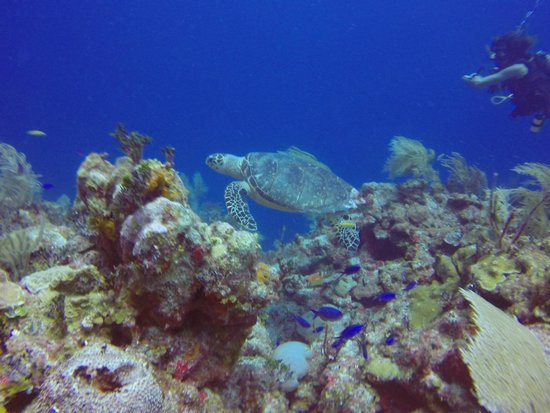 Dreamtime Dive Center : sea turtles to swim with.