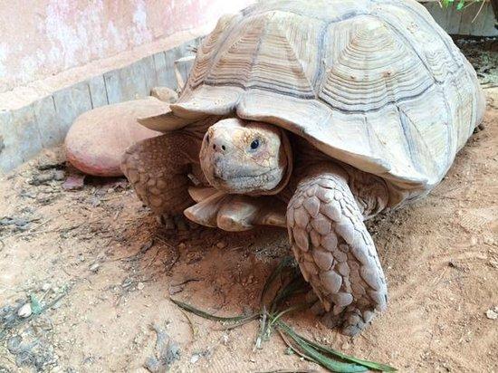 Riad Imourane: Tortoise