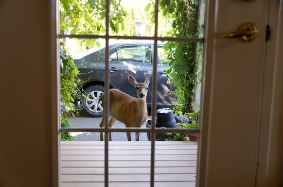 Blue Haven B & B: visitor at the door!!