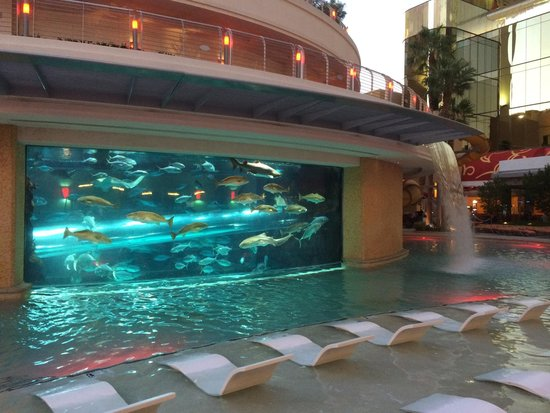 Pool w fish tank picture of golden nugget hotel las for Fish hotel tank