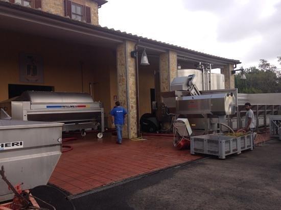 Locanda Terenzi: l'azienda agricola