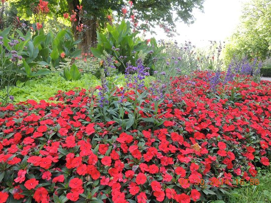 Burggarten: 公園内の花