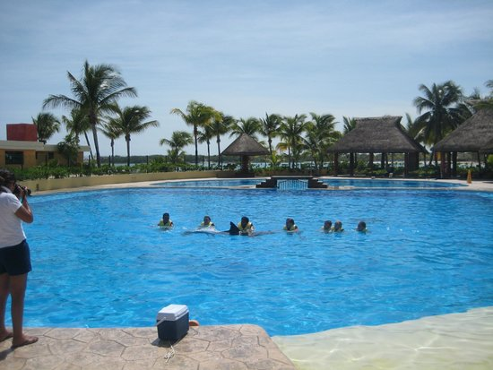 Dolphinaris Barcelo: Swimming by