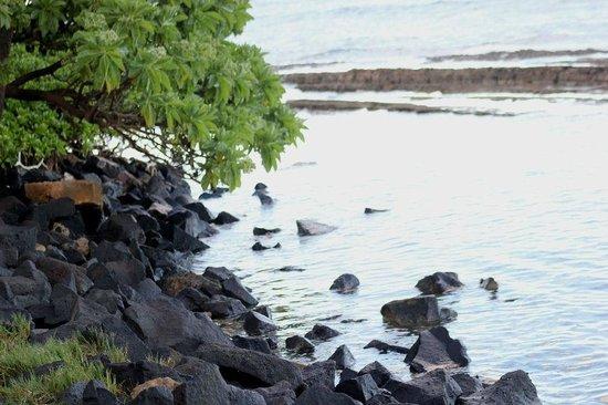 Kapaa Shores: the north side of the beach at Kapa'a Shores