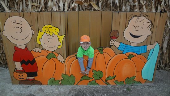 South Barrington, IL: It's the pumpkin patch, Charlie Brown