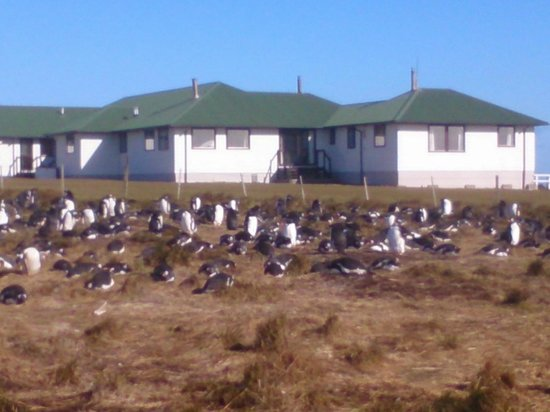 Sea Lion Lodge: Penguins at the gate.
