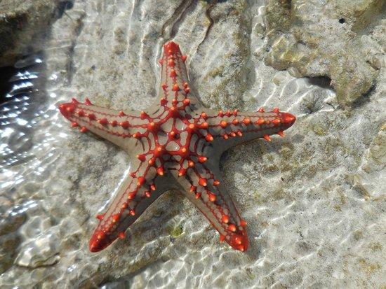 Villa Kiva Resort and Restaurant: barriera corallina