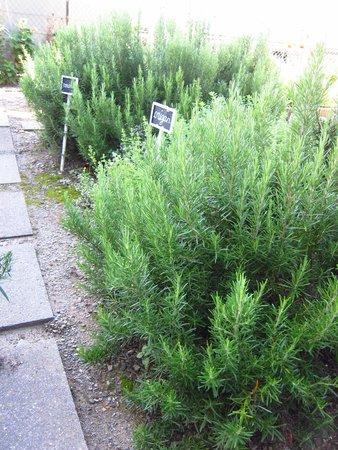 Herbs growing at Auberge de la Gare