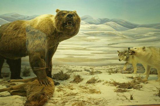 Yukon Beringia Interpretive Centre: Short Faced Bear And Lunch