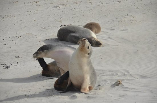 Seal Bay Conservation Park : Cute