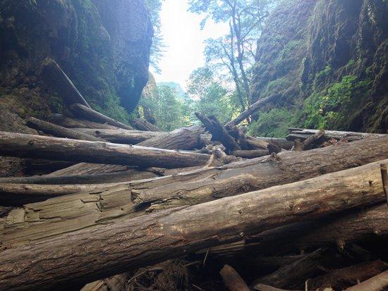 Oneonta Gorge: the logjam