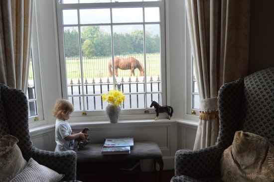 The Meadowsweet Hotel : Neigh!