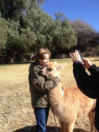 Patios de Cafayate Wine Hotel: Loving the lamas at Patios de Cafayate